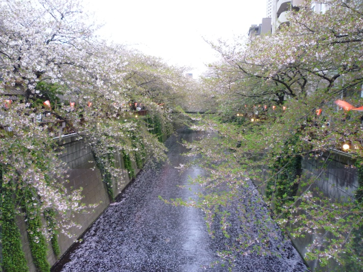 Nakameguro Canal