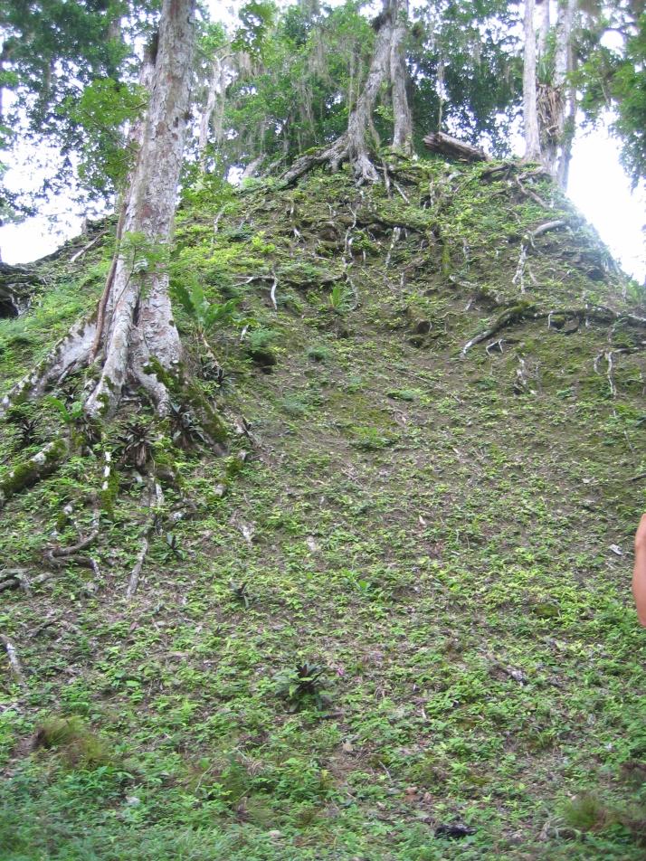 La selva lo cubre todo