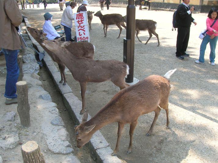 Los famosos ciervos de Nara