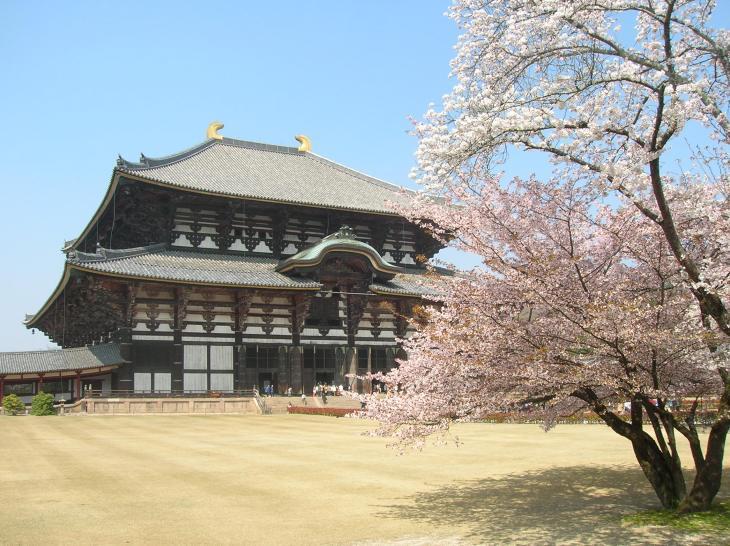 Tōdai-ji y el sakura