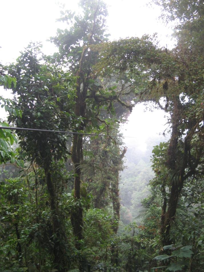 Una de las lineas del canoping de Selvatura