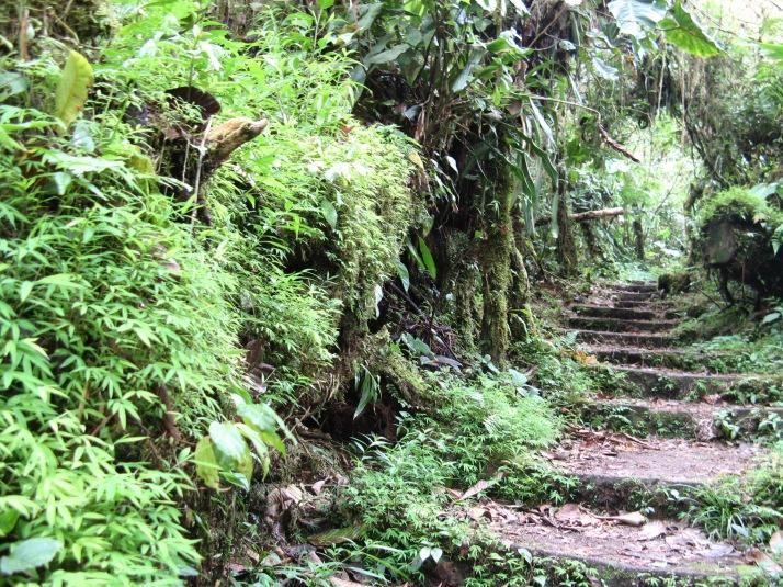 Monteverde 012